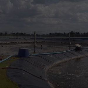 background shrimp farm